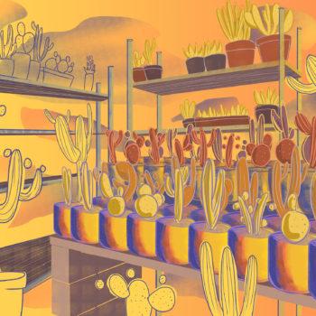 Succulents Stands