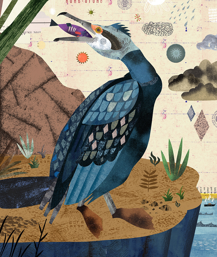 Reimagining the Great Cormorant